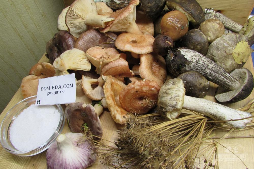 грибы для засолки фото и описание здесь помимо обоев